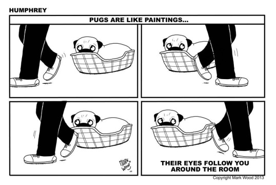 Pug Eyes