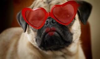love-pug